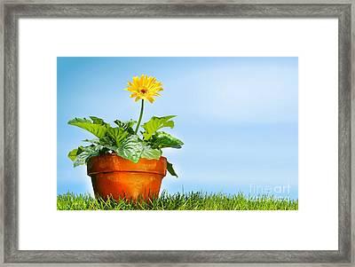 Flower Pot On The Grass Framed Print by Sandra Cunningham