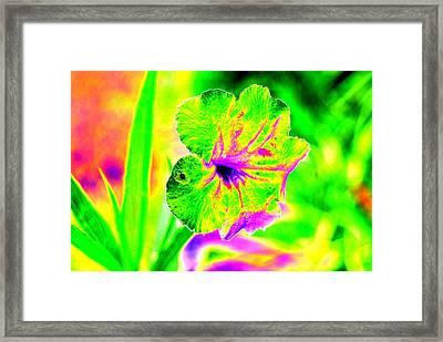 Flower Power Framed Print by Peter  McIntosh