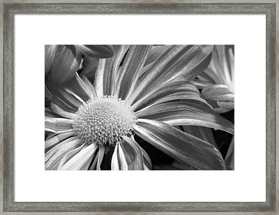 Flower Run Through It Black And White Framed Print by James BO  Insogna