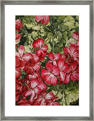 Flower Shot Framed Print by Hsin Tseng