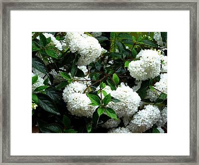 Flower Snow Balls Framed Print by Valerie Ornstein