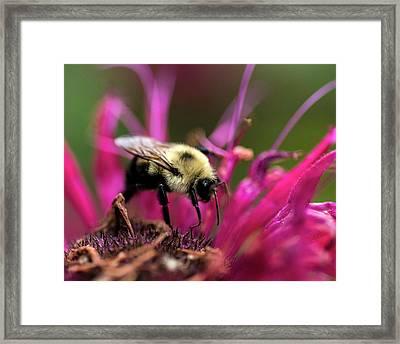 Flower Walking Framed Print by KG Photography