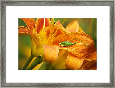 Flower With Company Framed Print by Christina Rollo