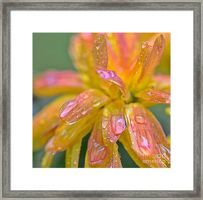 Flower With Rain Drops Framed Print by SK Pfphotography