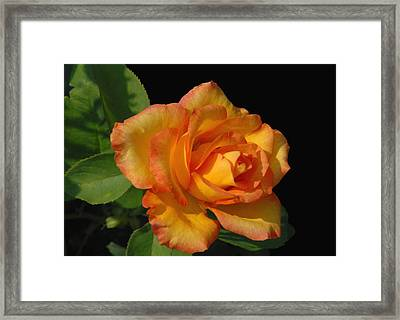 Flowers 722 Framed Print by Joyce StJames