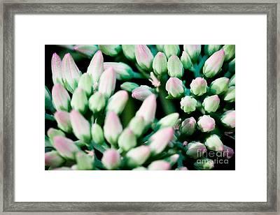 Flowers Bloom In Clusters Framed Print by Ryan Kelly