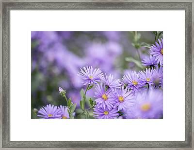 Flowers Framed Print by Cindy Grundsten