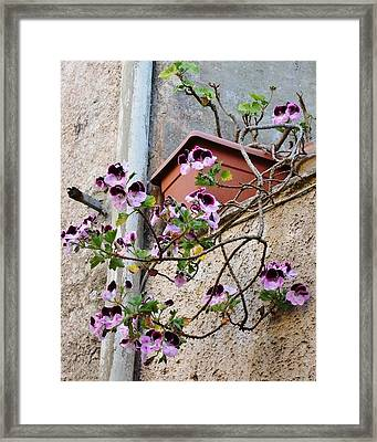 Flowers In Erice Framed Print by Beverly Kay