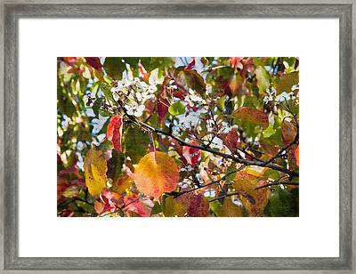Flowers In Pear Tree Digital Art Framed Print by Sherry  Curry