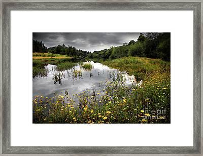 Flowery Lake Framed Print by Carlos Caetano