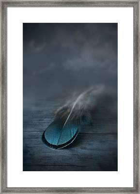 Flown Framed Print by Maggie Terlecki