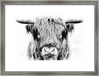 Fluffy Framed Print by Tim Gainey