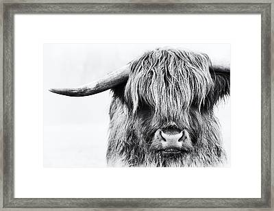Fluffys Mate Framed Print by Tim Gainey