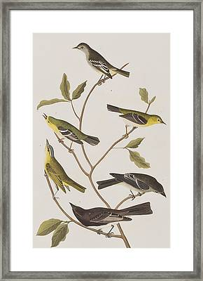 Fly Catchers Framed Print by John James Audubon