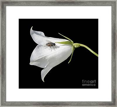 Fly On White Flower Framed Print by Marv Vandehey