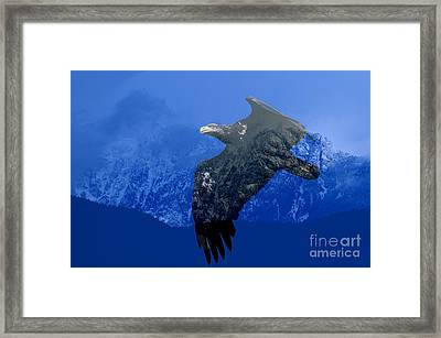 Fly Wild Fly Free Framed Print by Sharon Talson