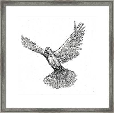 Flying Dove Framed Print by Joy Neasley