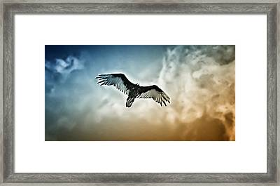 Flying Falcon Framed Print by Bill Cannon