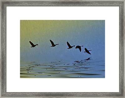 Flying Low Framed Print by Bill Cannon