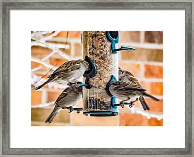 Flying Piglets Framed Print by Steve Harrington
