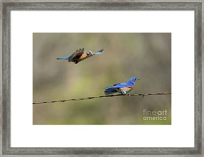 Flying To You Framed Print by Mike Dawson