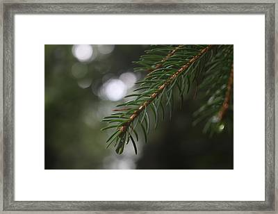Focus I Framed Print by Andrea Guariglia