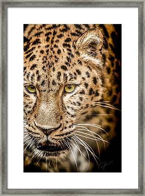 Focus Framed Print by Paul Neville