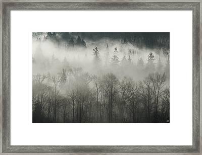 Fog Enshrouded Forest Framed Print by Lisa Knechtel