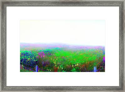 Foggy Flowers Framed Print by Jan W Faul