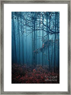 Foggy Forest Framed Print by Carlos Caetano