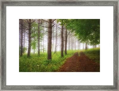 Foggy Forest - Retzer Nature Center Trails Framed Print by Jennifer Rondinelli Reilly