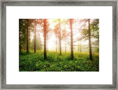 Foggy Morning - Retzer Nature Center Trails Framed Print by Jennifer Rondinelli Reilly