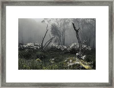 Fogscape Framed Print by Andrew Paranavitana