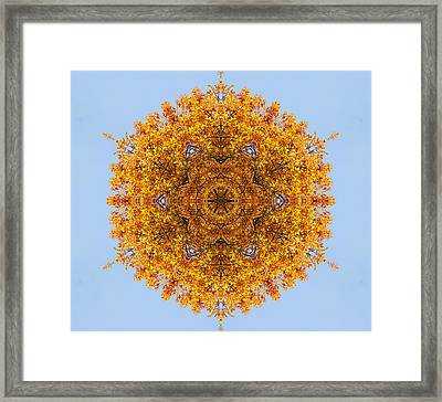 Foliage Creations 18 Framed Print by Lilia D