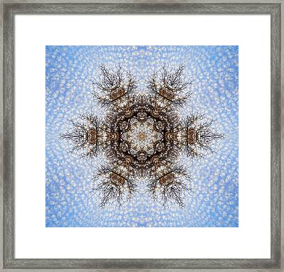Foliage Creations 20 Framed Print by Lilia D