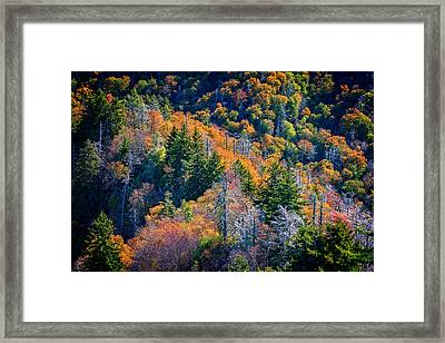 Foliage From Chimney Tops Framed Print by Rick Berk