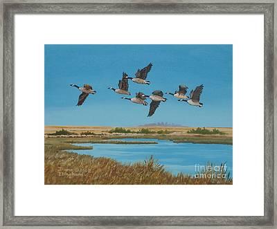 Follow The Leader Framed Print by Diane Ellingham
