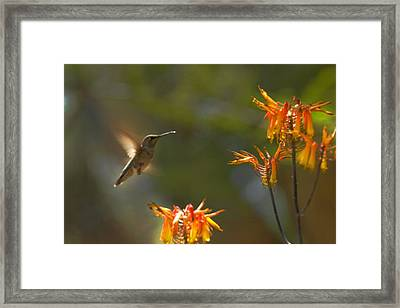 Food For Flyers Framed Print by Richard Henne