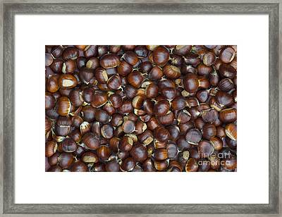 Foraged Sweet Chestnuts Framed Print by Tim Gainey