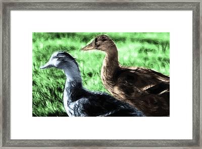 Foraging Ducks On Grass Framed Print by Steve Ohlsen