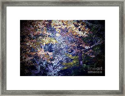 Forest Abstract Framed Print by Marjorie Imbeau