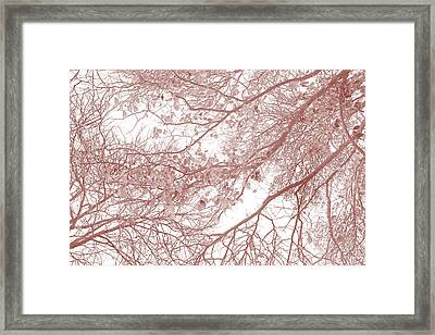 Forest Canopy Framed Print by Az Jackson