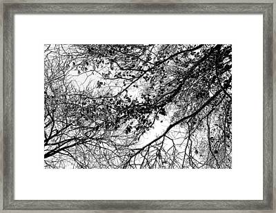 Forest Canopy Bw Framed Print by Az Jackson