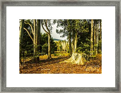 Forest Clearing In The Woods Framed Print by Jorgo Photography - Wall Art Gallery