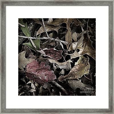 Forest Floor - Leaf 10 Framed Print by Pete Hellmann
