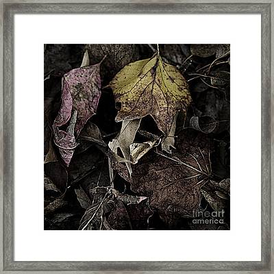 Forest Floor - Leaf 9 Framed Print by Pete Hellmann