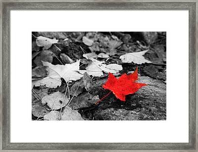 Forest Floor Maple Leaf Framed Print by Adam Pender