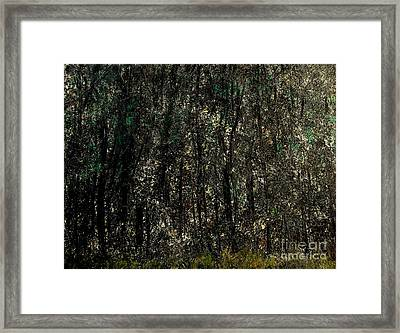 Forest For The Trees Framed Print by Rick Maxwell