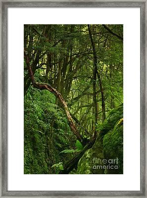 Forest Framed Print by Gaspar Avila