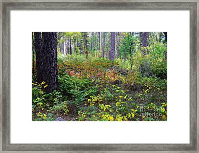 Forest In Autumn Framed Print by Debby Pueschel